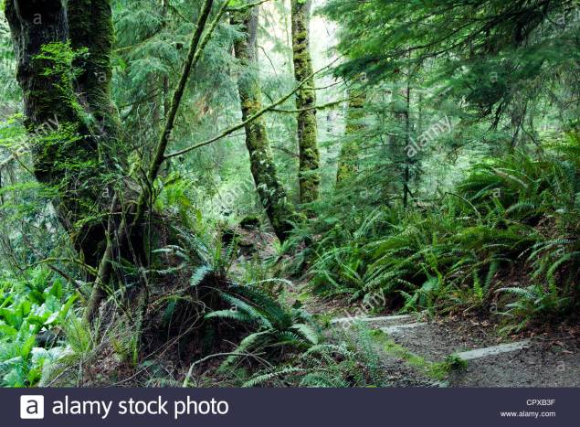 forest-trail-south-whidbey-island-state-park-whidbey-island-washington-CPXB3F